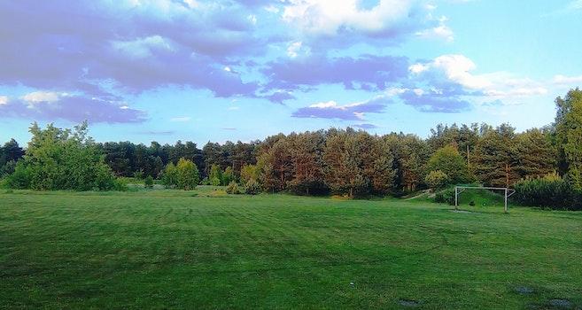 Free stock photo of sky, grass, tree, pith