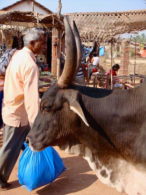 Photos gratuites de inde, marché à ciel ouvert, sacré, vaches