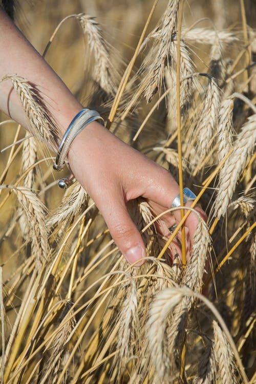 Immagine gratuita di agricoltura, azienda agricola, bracciali