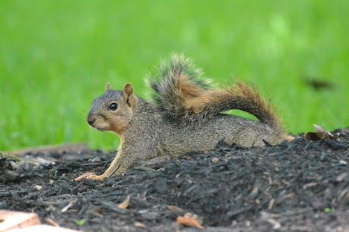 An Adorable Wild Squirrel