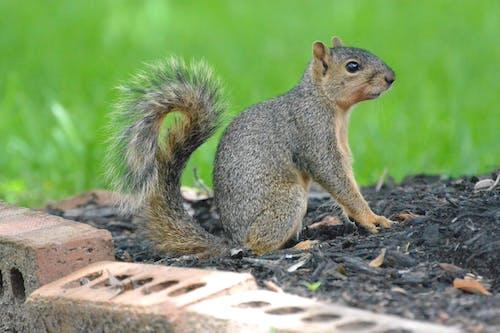 An Adorable Wild Squirrel Sitting