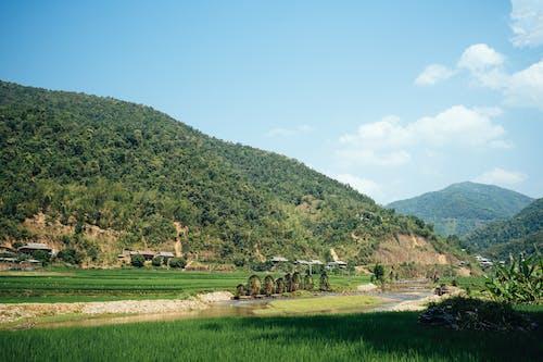 Foto d'estoc gratuïta de camp, camp agrícola, camps de cultiu