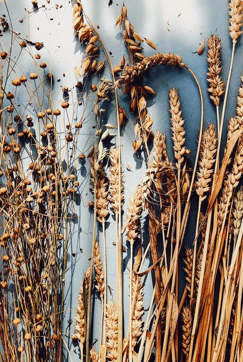 Brown Dried Plant