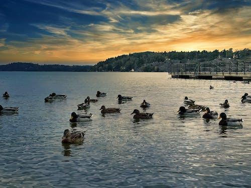 Foto profissional grátis de beira do lago, beira-lago, Estocolmo