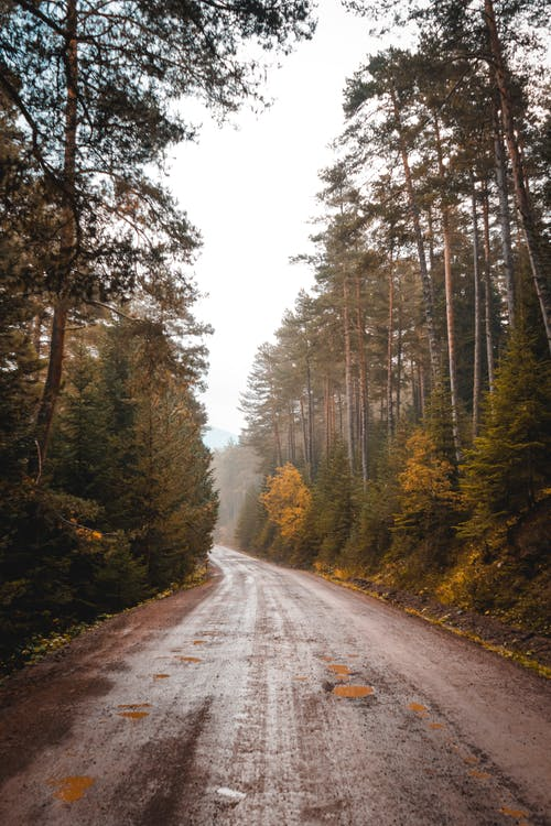 Dirt Road Between Tall Trees
