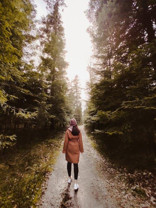 Kostnadsfri bild av äventyr, blad, dagsljus