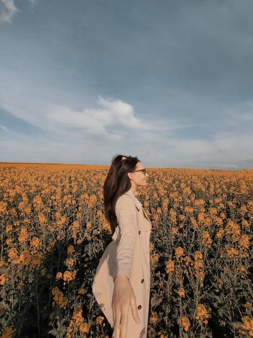 Kostnadsfri bild av åkermark, blomma, falla