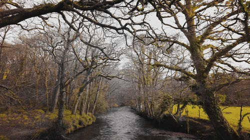 Kostnadsfri bild av blad, falla, flod
