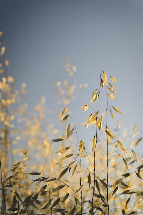Foto stok gratis batang tanaman, bidikan sudut sempit, Daun-daun