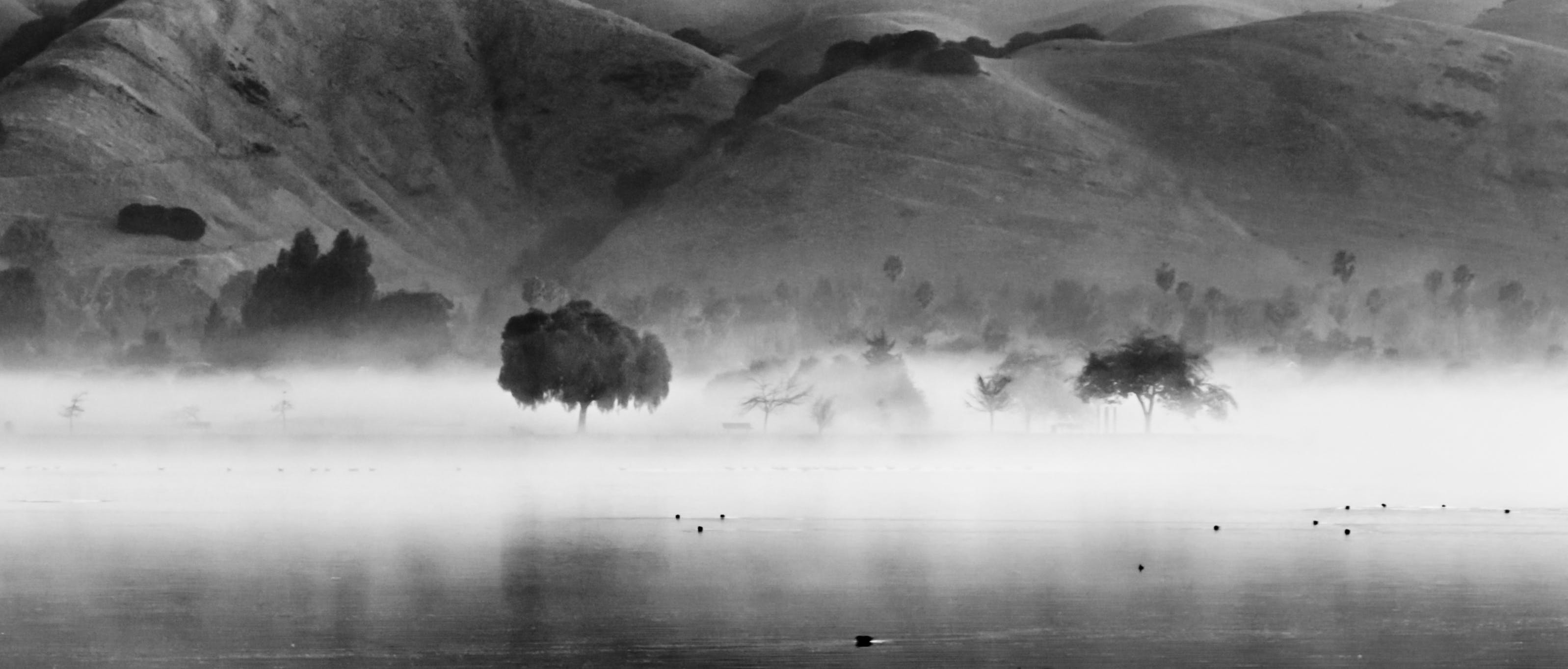 Photos gratuites de b&w, brouillard, eau, fremont