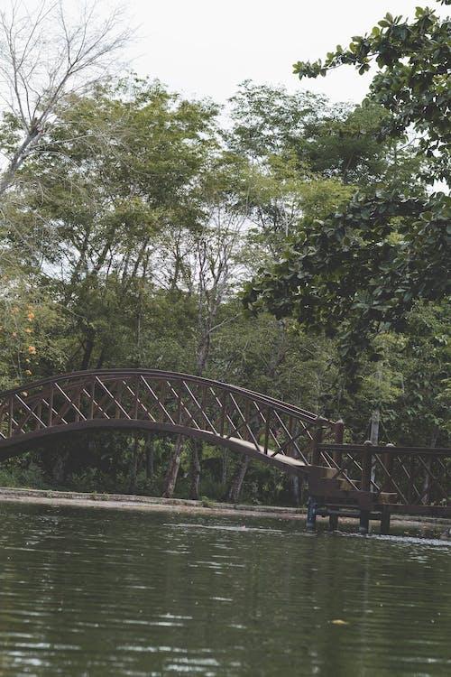 açık hava, ağaçlar, arazi içeren Ücretsiz stok fotoğraf