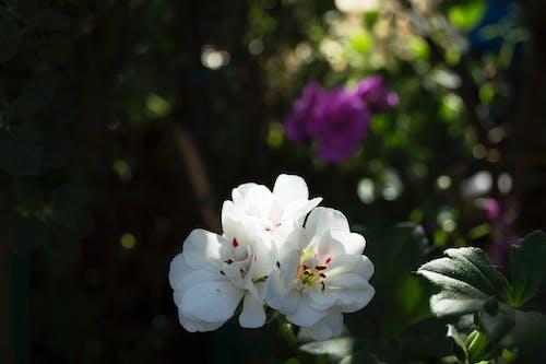 Free stock photo of flower, garden