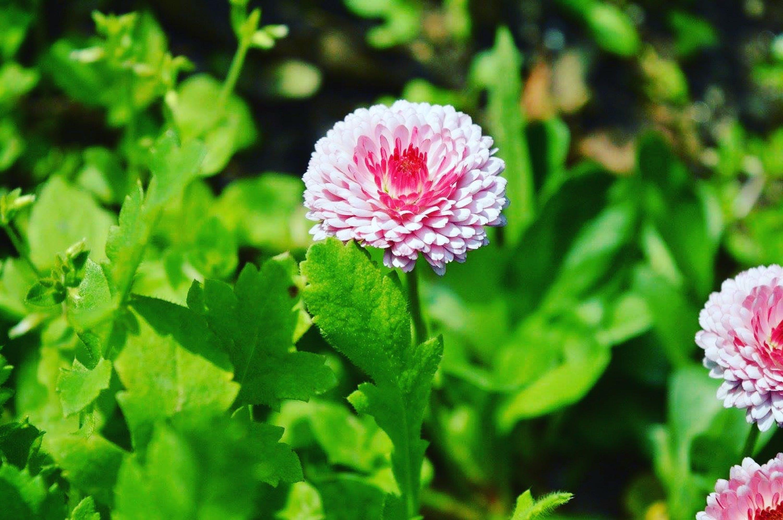 Ảnh lưu trữ miễn phí về cánh hoa, hệ thực vật, hoa, sự phát triển