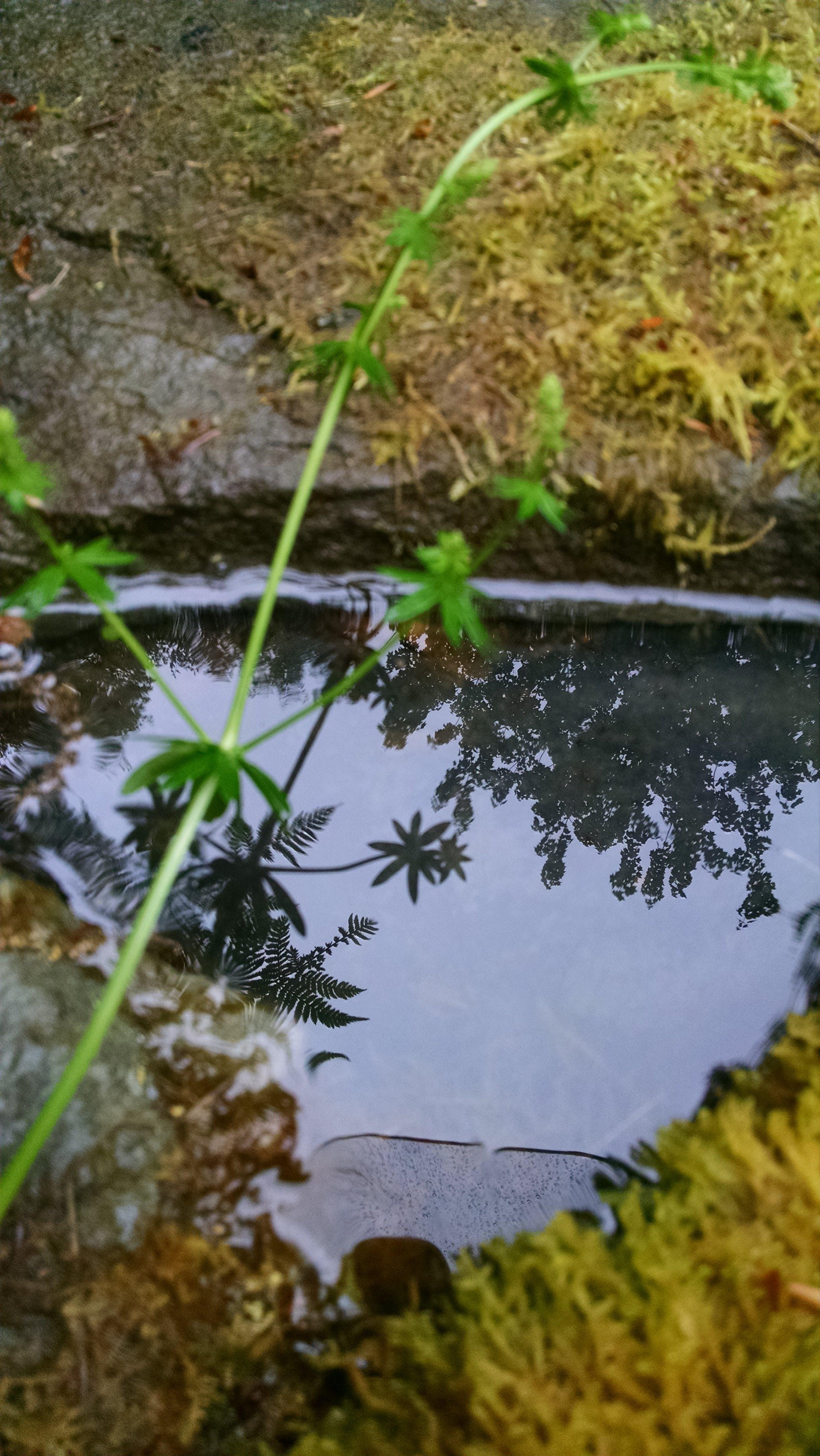 Free stock photo of grass, moss, nature, puddle