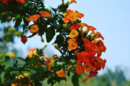 Безкоштовне стокове фото на тему «відділення, делікатний, дерево, зростання»
