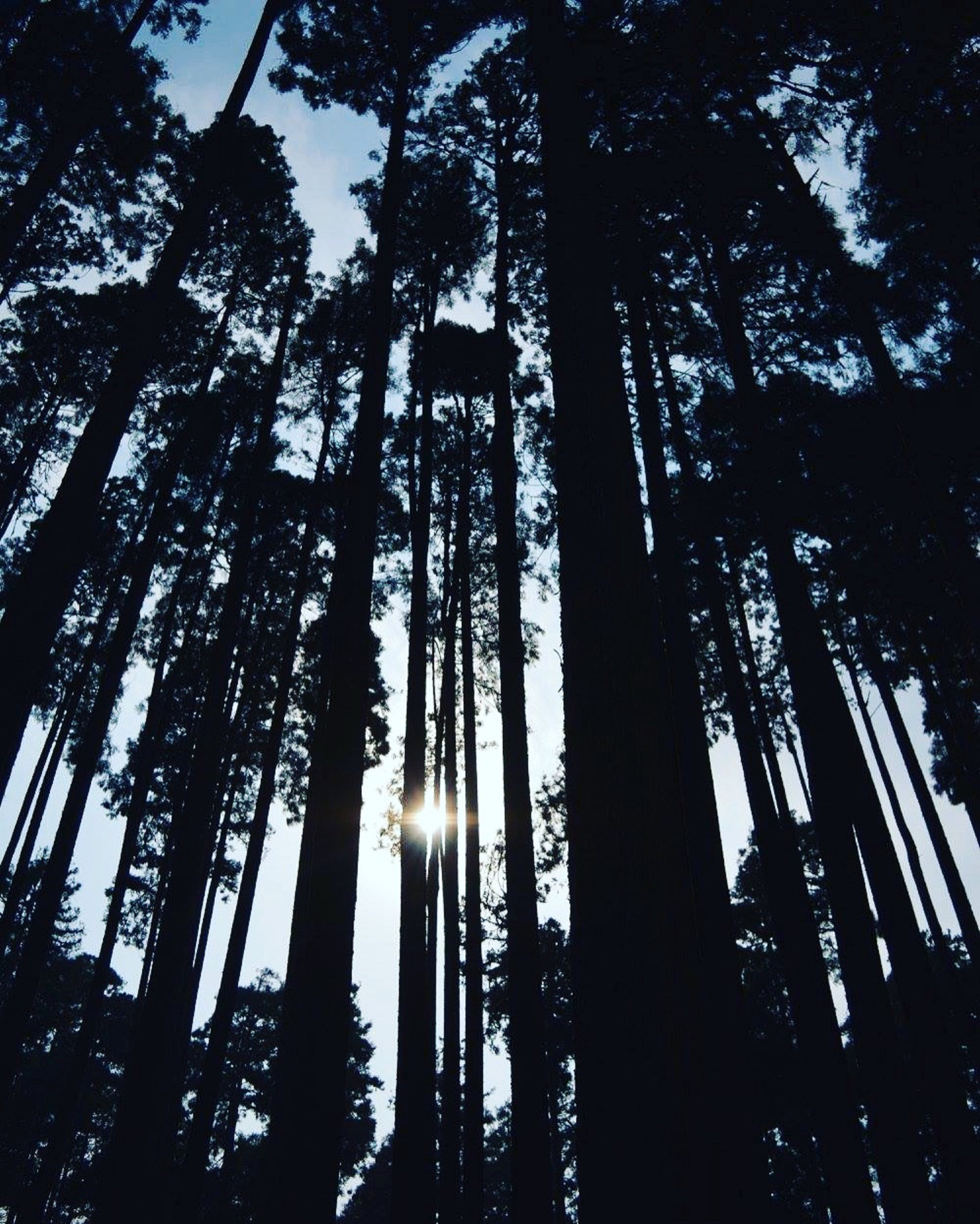 Silhouette Of Forest