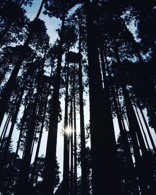 경치가 좋은, 나무, 숲, 역광을 받은의 무료 스톡 사진