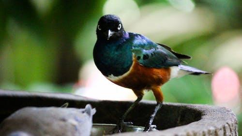 Free stock photo of animal, beautiful, bird