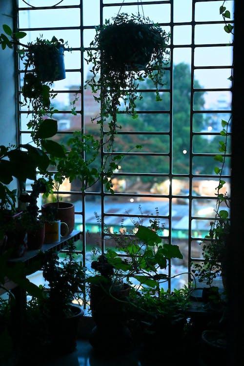 Foto profissional grátis de belcony, janela, planta