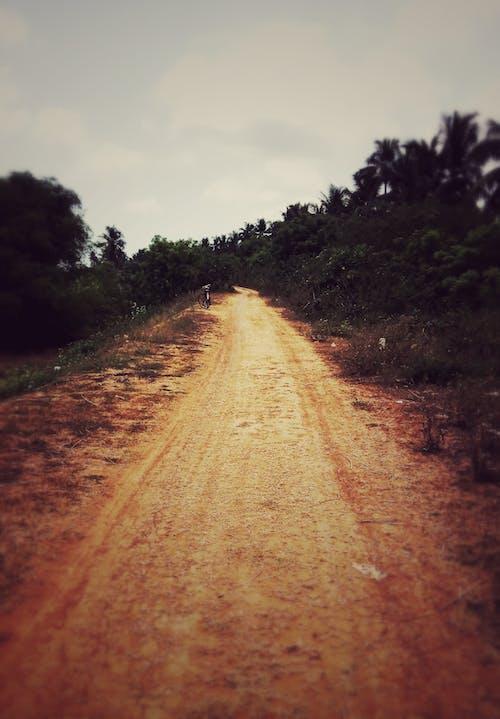 Darmowe zdjęcie z galerii z indie, obszar wiejski, wioska