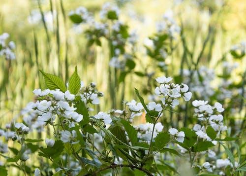 きれいな花, フラワーズ, 夏の無料の写真素材