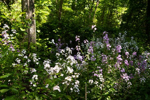 フラワーズ, 森林地帯, 野の花の無料の写真素材