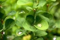 plant, rain, raindrops