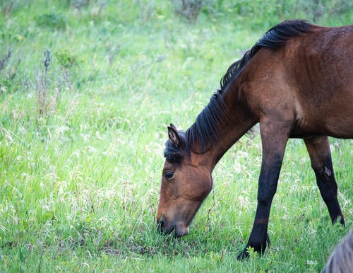 Free stock photo of animal farming, horse