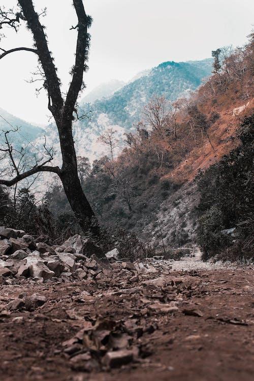 Kostenloses Stock Foto zu berg, fernweh, wandern