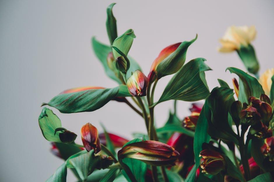 New free stock photo of flowers, macro, bloom