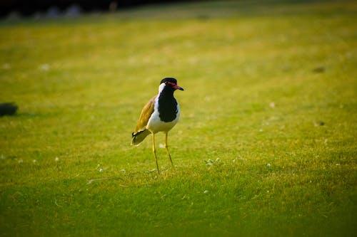 Free stock photo of animals, beautiful nature, bird