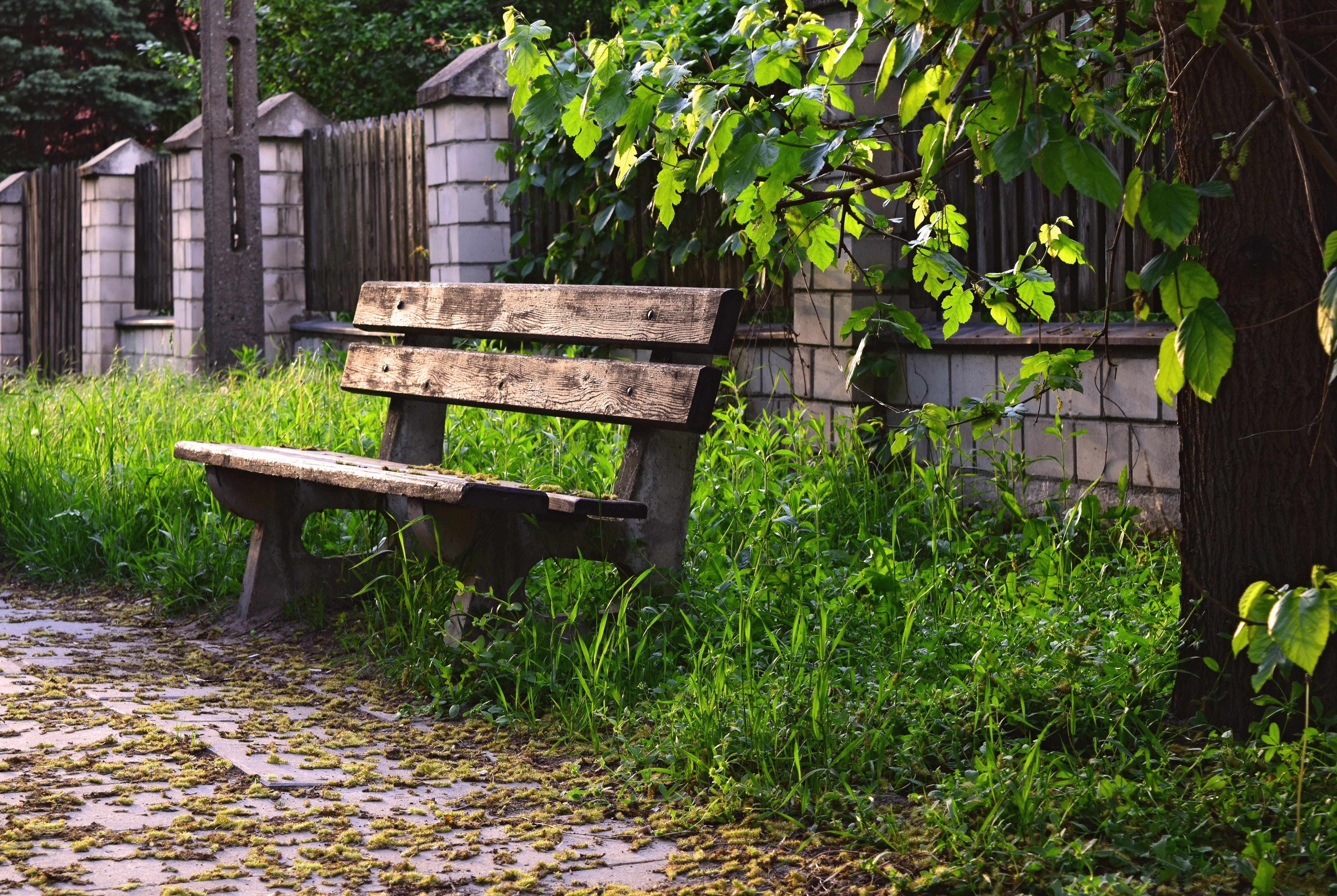 Free stock photo of bench, bus stop, spring