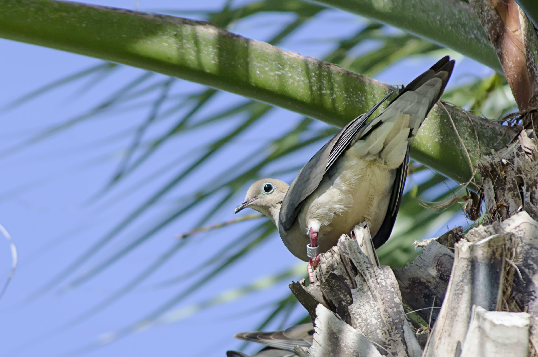 Free stock photo of bird, blue sky, pigeon