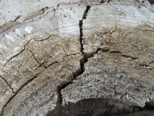 Безкоштовне стокове фото на тему «дерево, пень, старий»