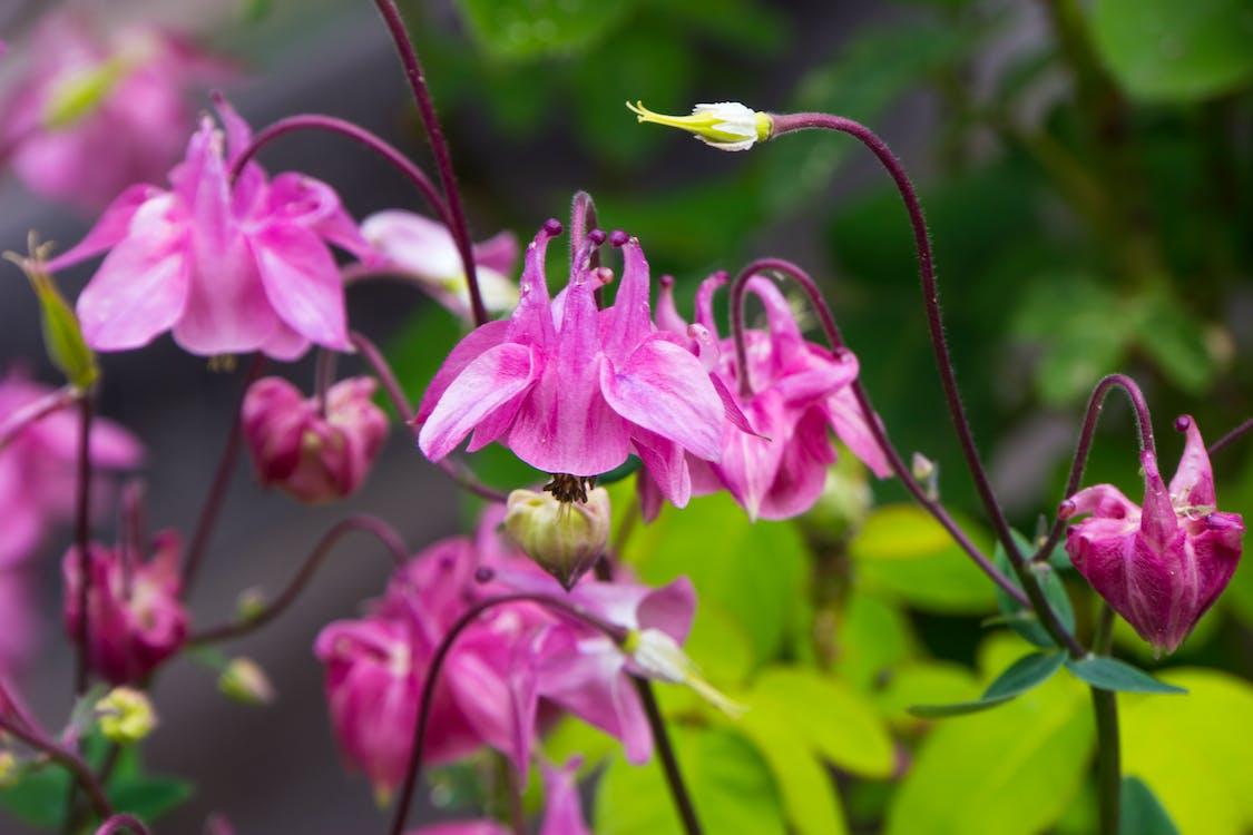 Free stock photo of flower, lily, macro