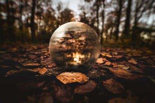 คลังภาพถ่ายฟรี ของ ต้นไม้, ธรรมชาติ, ป่า, พื้นหลังเบลอ
