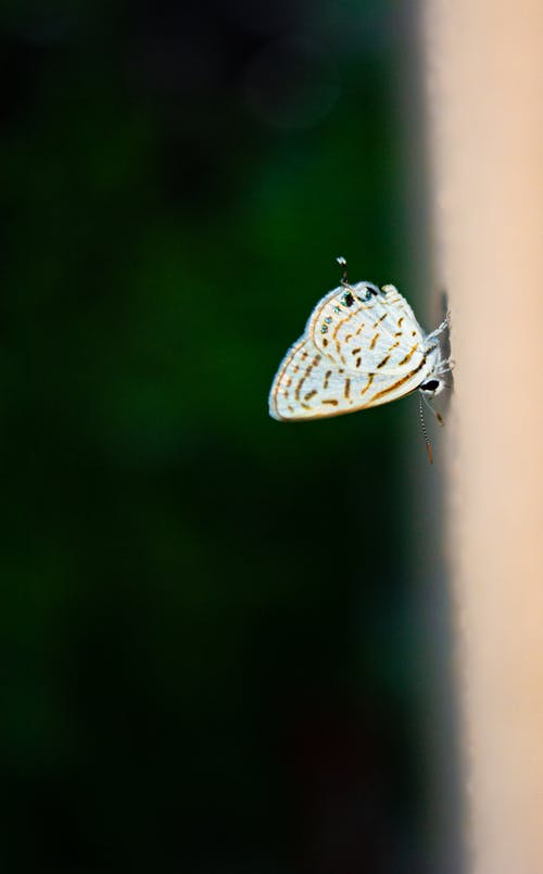 White and Black Butterfly on Green Plant