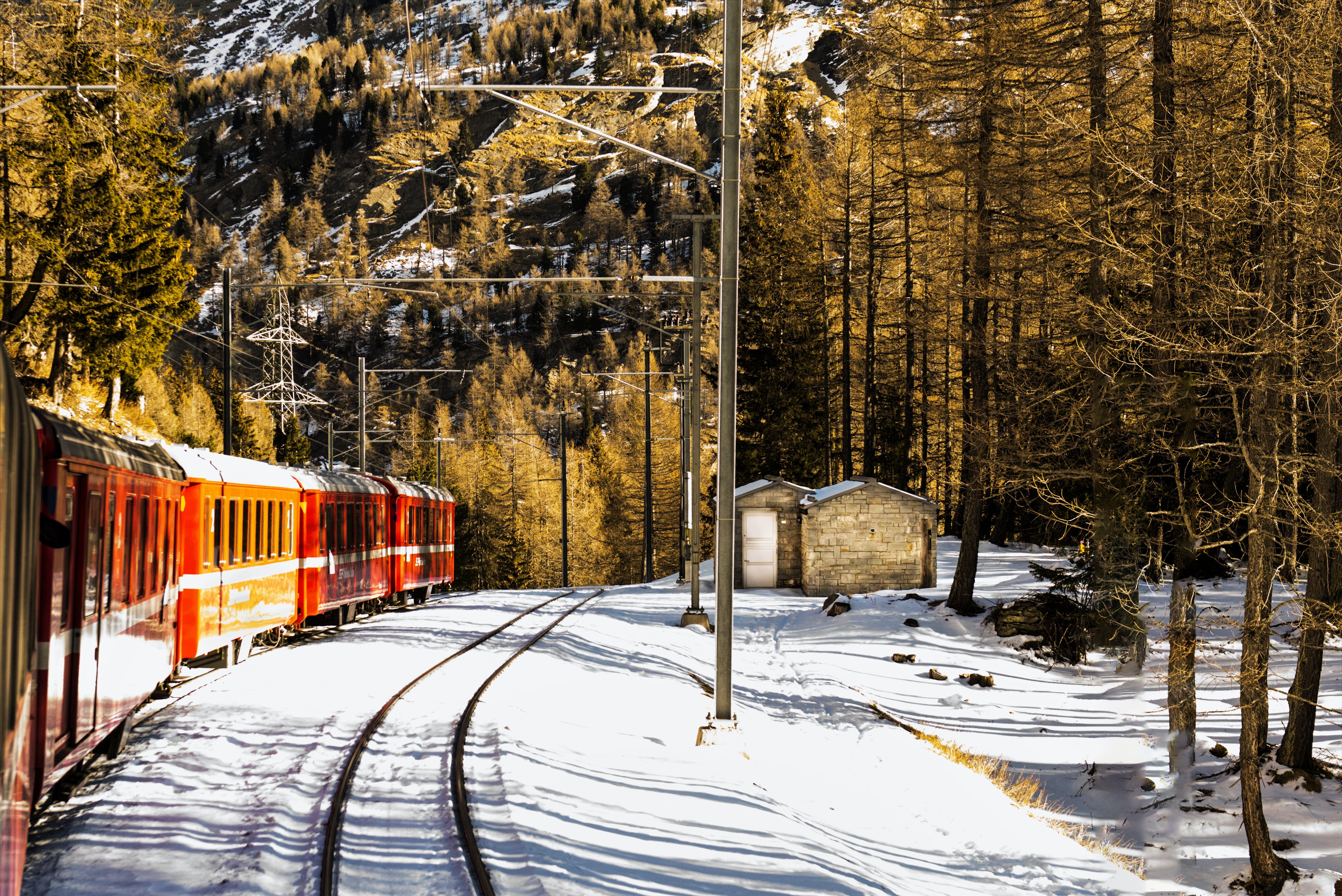 Gratis arkivbilde med årstid, forkjølelse, frost, skog