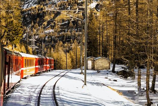 Red Train Near Trees