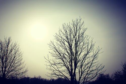 Foto d'estoc gratuïta de #tree, arbres, bonic, cel clar