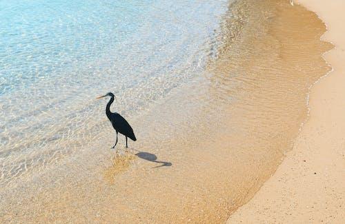 Fotobanka sbezplatnými fotkami na tému červené more, veľký vták
