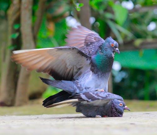 Ilmainen kuvapankkikuva tunnisteilla lintu, lintu silmä, suvuton