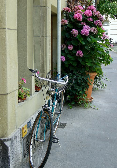 Free stock photo of bicycle, flower pot, hydrangeas, pavement
