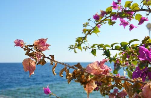 Fotobanka sbezplatnými fotkami na tému exotické kvety, krása