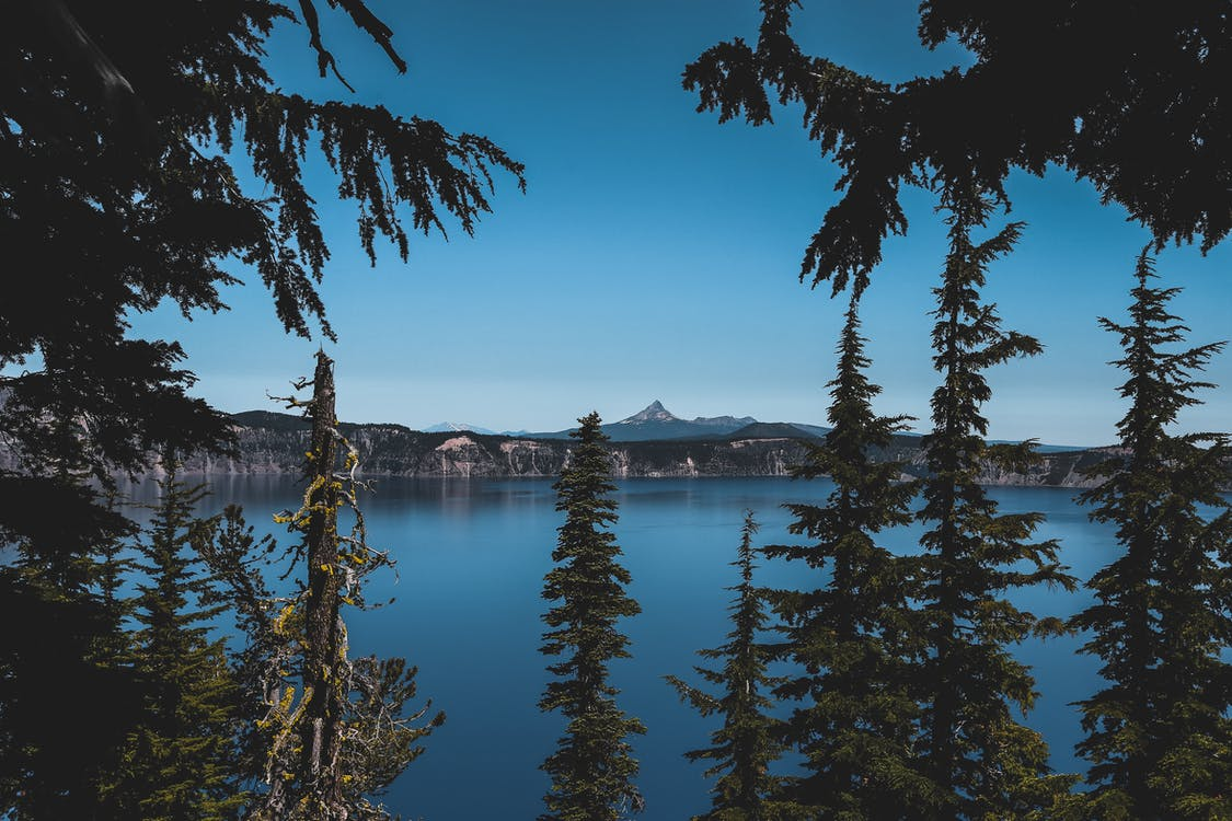 Green Trees Against Body of Water Photo