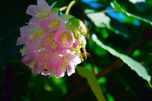 Fotobanka sbezplatnými fotkami na tému fialová, kokon, kokony, kvet
