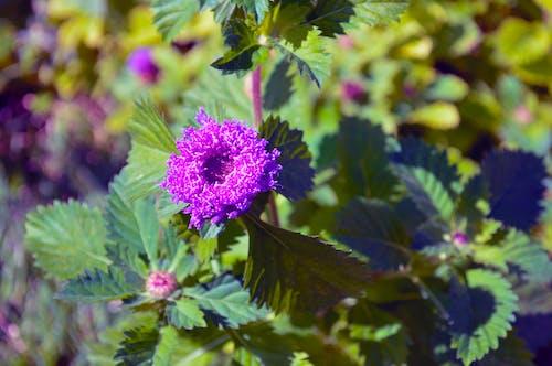 Fotobanka sbezplatnými fotkami na tému fialová, kvet, kvety, kytica