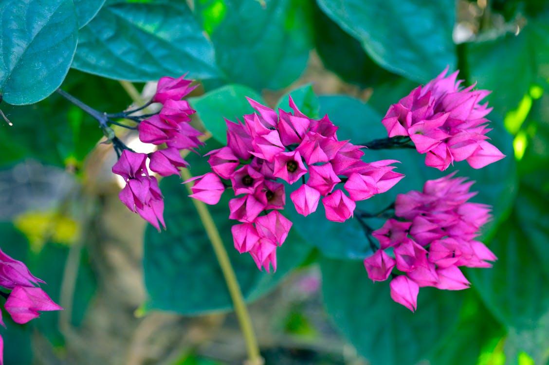 一束花, 增長, 天性