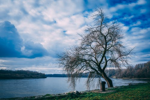 Landscape Photography of Bare Tree Near Body of Water Under Cloudy Skies
