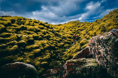Gratis lagerfoto af bakke, bjerg, dagslys, græs